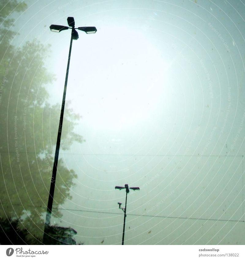 summer here kids Sommer Himmel Licht Straßenbeleuchtung Morgen Überwachungskamera Physik Wachtraum Baum Himmelskörper & Weltall sky sunshine tree milchigkeit
