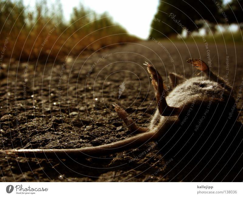 mouseover Tier Verkehr Allee Baum Baumreihe Teer Asphalt Säugetier Plage Tod Schwanz Fell Wegrand Erdmaus Fehler animal Maus Wege & Pfade fahradweg Straße death