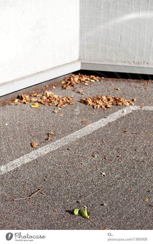 blätter Natur Blatt Wand Herbst Mauer Wetter Vergänglichkeit Schönes Wetter Boden