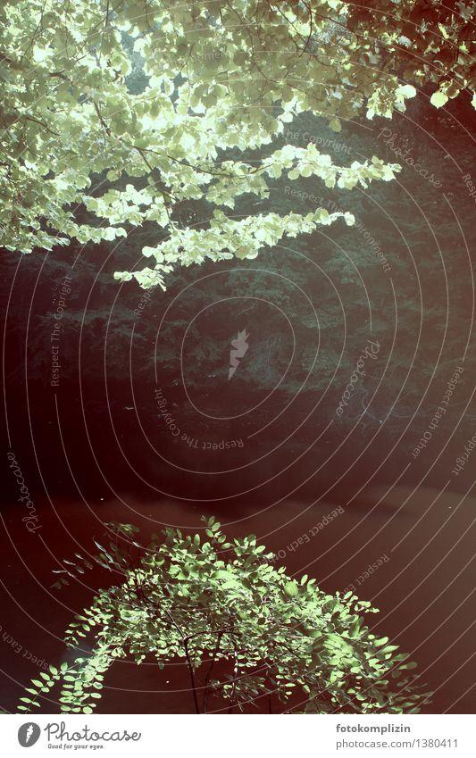 verwunschener Waldsee Blätter Wasser Naturschutzgebiet Baum Sträucher See Seeufer still zugewachsen Lichtspiel Lichteinfall Flussufer Weiher leuchten natürlich