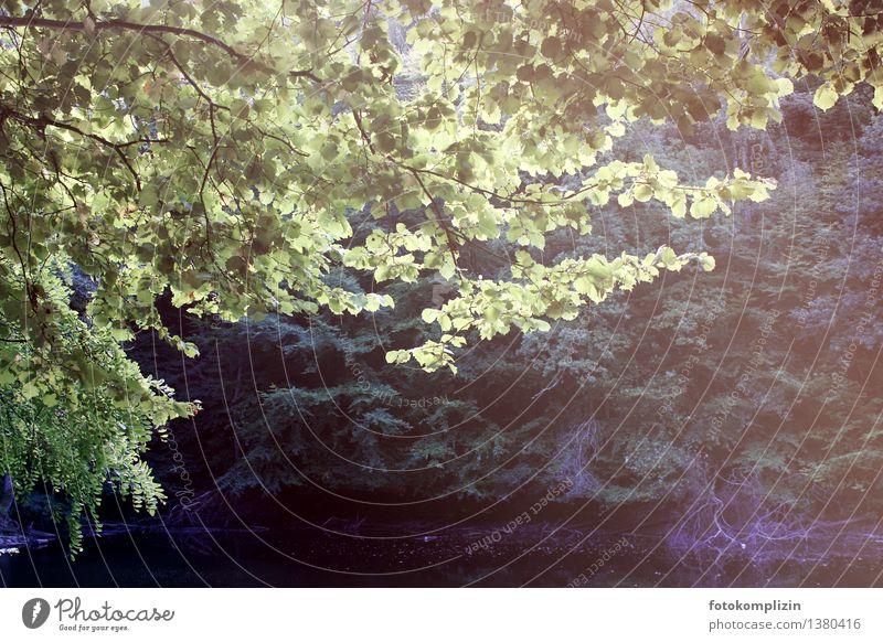 herbst see 1 Umwelt Natur Landschaft Pflanze Baum Blatt Wald Seeufer Waldsee weiher leuchten Wachstum dunkel Stimmung Einsamkeit Erholung Idylle Gedeckte Farben