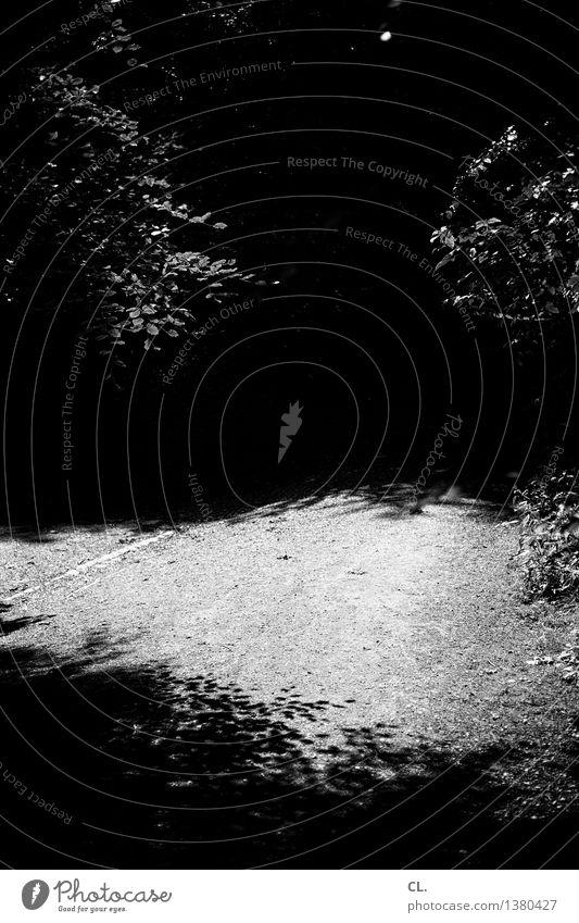 augen zu und durch Umwelt Natur Sommer Schönes Wetter Baum Blatt Wald dunkel gruselig Wege & Pfade Schwarzweißfoto Außenaufnahme Menschenleer Tag Licht Schatten