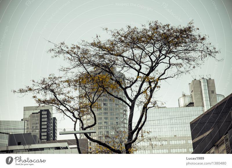 Großstadtdschungel Herbst Pflanze Baum Sträucher Park Rotterdam Niederlande Stadt Hauptstadt Stadtzentrum bevölkert Hochhaus Bankgebäude Industrieanlage Fabrik