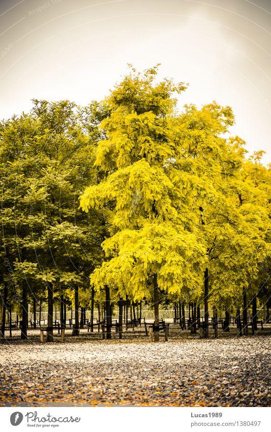 Herbst, auch im Park Pflanze Himmel Wolken schlechtes Wetter Baum Rotterdam Niederlande Stadt gelb grau grün verblüht Verschiedenheit Baumschule Ordnung