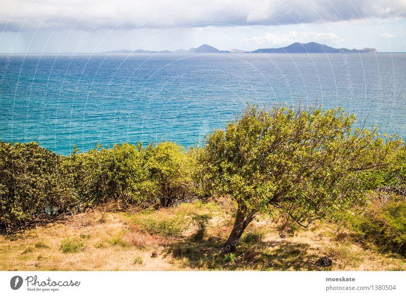 Karibik Umwelt Natur Landschaft Pflanze Urelemente Erde Luft Wasser Himmel Wolken Sommer Wetter Schönes Wetter Wind Regen Baum Gras Grünpflanze exotisch Wiese