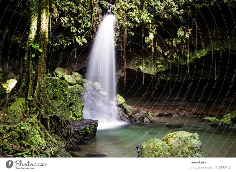 Emeral Pool, Dominica Umwelt Natur Pflanze Urelemente Wasser Sommer Baum Gras Moos Blatt Grünpflanze exotisch Wald Urwald Felsen Teich Bach Wasserfall grün