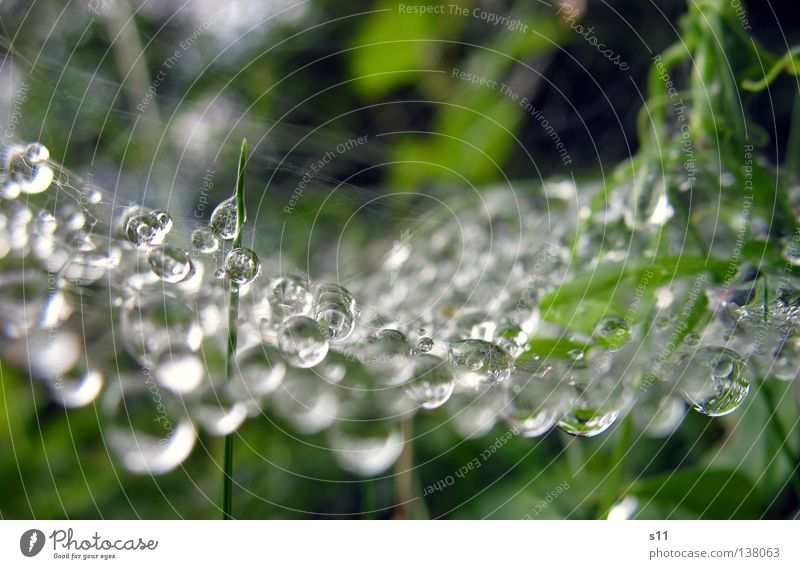 Art Of Nature schön grün Pflanze Regen Wetter Wassertropfen nass Perle Spinne Nähgarn Kunstwerk Spinnennetz