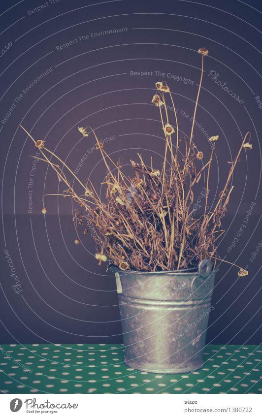Vergißmeinleiderdoch alt Pflanze Blume ruhig Blüte Gefühle Herbst Tod braun Stimmung Wachstum Vergänglichkeit Wandel & Veränderung Vergangenheit Trauer trocken