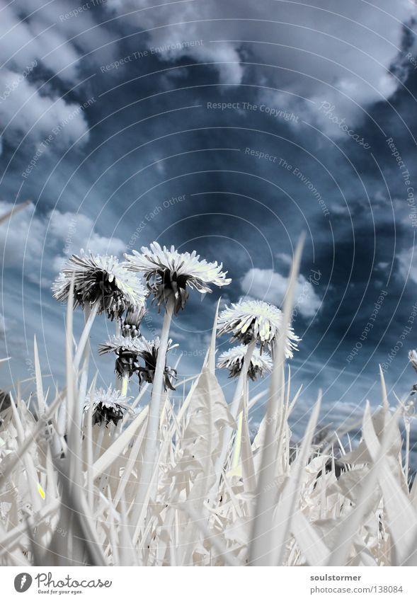guck mal... Personenzug Infrarotaufnahme Farbinfrarot Baum Holzmehl Wolken weiß schwarz Sonnenblume Löwenzahn Frühling Gras Wiese Froschperspektive Pflanze