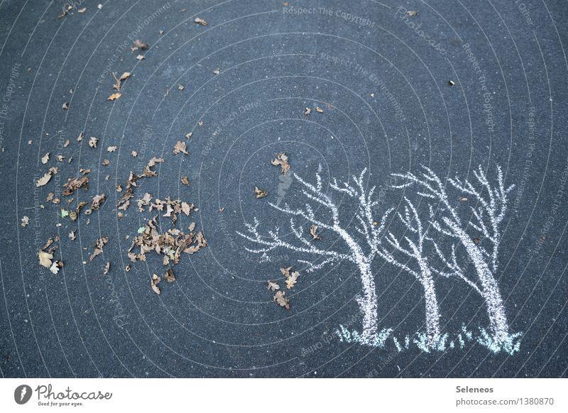 Herbst Umwelt Natur Klima Wetter Unwetter Wind Sturm Baum Blatt Laubbaum natürlich Farbfoto Außenaufnahme
