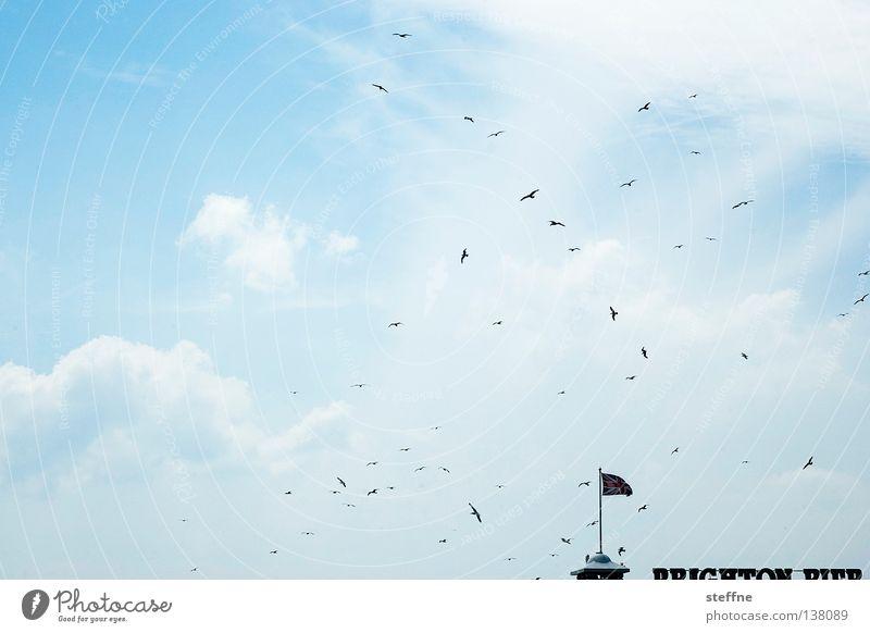 Urlaubsparadis Himmel Strand Wolken Vogel Brücke Fahne Anlegestelle Möwe Tourist England Großbritannien Brighton Seebrücke Union Jack