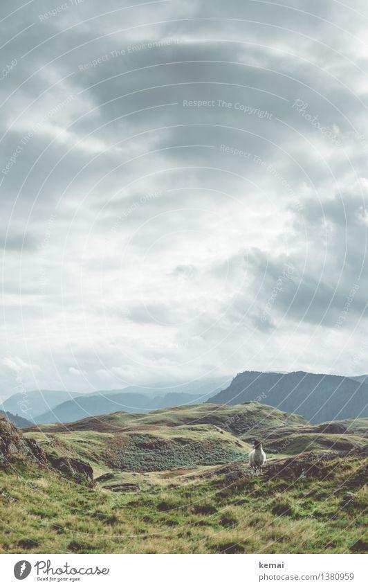 The spectator Himmel Natur Ferien & Urlaub & Reisen grün Landschaft Wolken Tier Berge u. Gebirge Umwelt Herbst Gras Freiheit Wetter Feld authentisch Sträucher