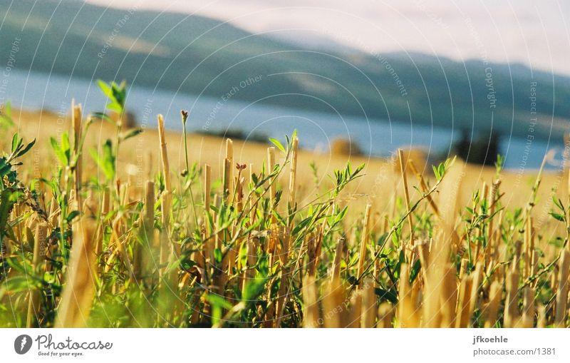 Blick auf die Nordsee 2 Himmel Feld Korn England Stroh