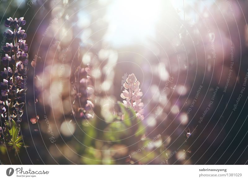 Natur Ferien & Urlaub & Reisen Pflanze Sommer Sonne Erholung Blume Umwelt Blüte Frühling Garten Freiheit träumen Feld Dekoration & Verzierung Warmherzigkeit