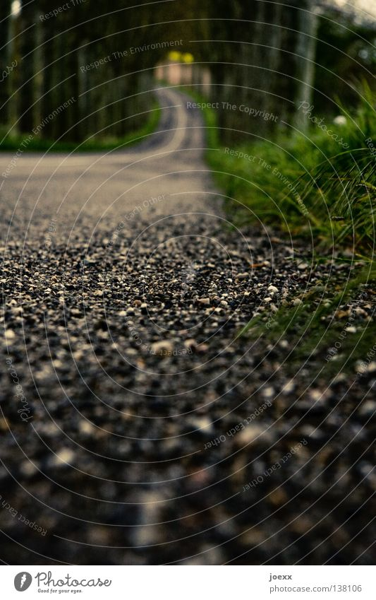 Straßenlage Allee Froschperspektive Fahrbahn fahren Gras Am Rand Straßenbelag Straßenrand Teer Unschärfe unterwegs Verkehr Verkehrswege Bodenbelag Kurve