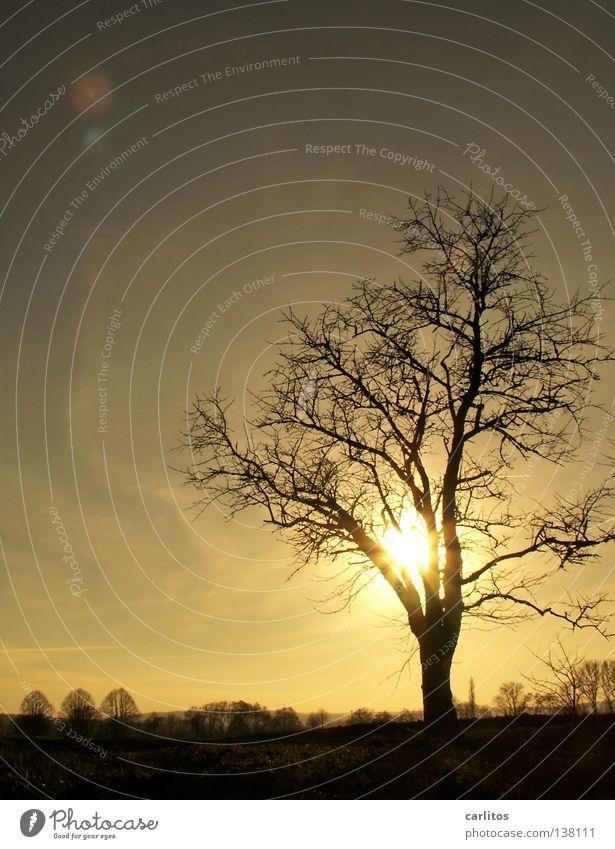 Winterschlußverkauf Baum Gegenlicht Blatt Blattknospe Photosynthese Sauerstoff Blattgrün Blüte Obstbaum Feldmark Bilderrätsel Froschperspektive Wolken Wetter