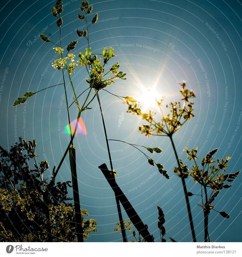 Wiese Sträucher Waldlichtung Blende Gegenlicht Sommer Sonne Froschperspektive geblitzt Baum grün Dämmerung Abend wandern Wegrand Tier Pflanze Echte Farne