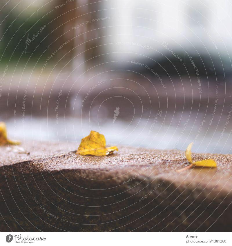 an eines Brunnens Rand Wasser Wassertropfen Herbst Blatt Herbstlaub Herbstfärbung Park verblüht trist gelb rot silber Trauer Tod Einsamkeit Senior