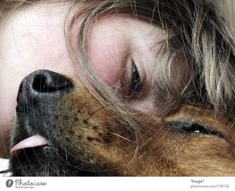 mein hund und ich Hund Kuscheln Zufriedenheit Freude schnuffel hundezunge Haare & Frisuren harzerfuchs