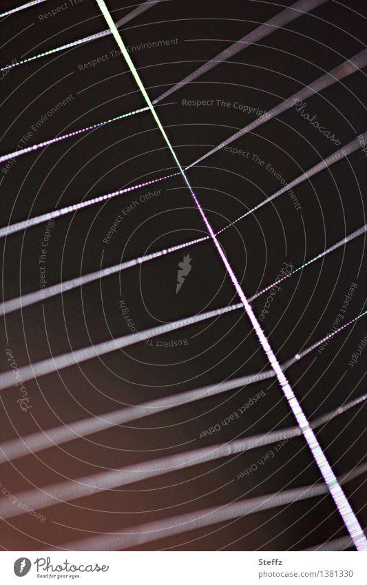 Geometrie eines Spinnennetzes Natur Linie Netz Netzwerk dunkel glänzend nah natürlich bedrohlich Symmetrie Muster regelmässig fadenförmig proportional diagonal