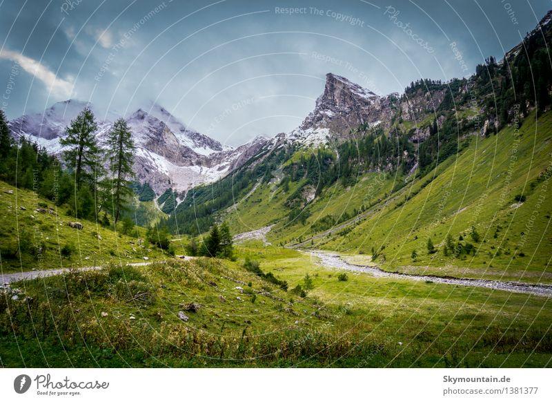Ab in die Berge! Natur Ferien & Urlaub & Reisen Pflanze blau grün Sommer Erholung Landschaft ruhig Tier Ferne Berge u. Gebirge Umwelt Leben Freiheit