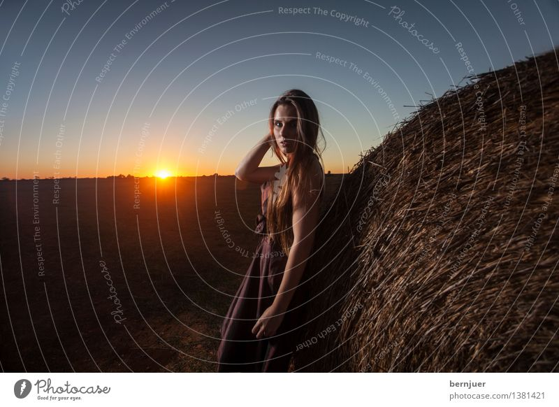 sunset girl feminin Junge Frau Jugendliche 1 Mensch 18-30 Jahre Erwachsene Natur Luft Wolkenloser Himmel Sonne Sonnenaufgang Sonnenuntergang Schönes Wetter Feld