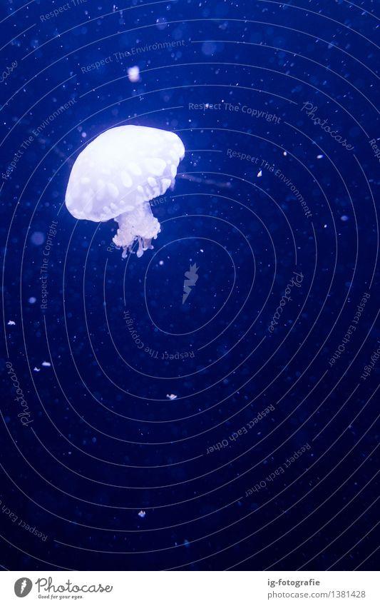 Quallen im blauen Wasser im Aquariumbecken Zoo Schwimmen & Baden träumen Gefühle Stimmung Berlin Zoo Berlin Tank Unterwasseraufnahme Farbfoto mehrfarbig