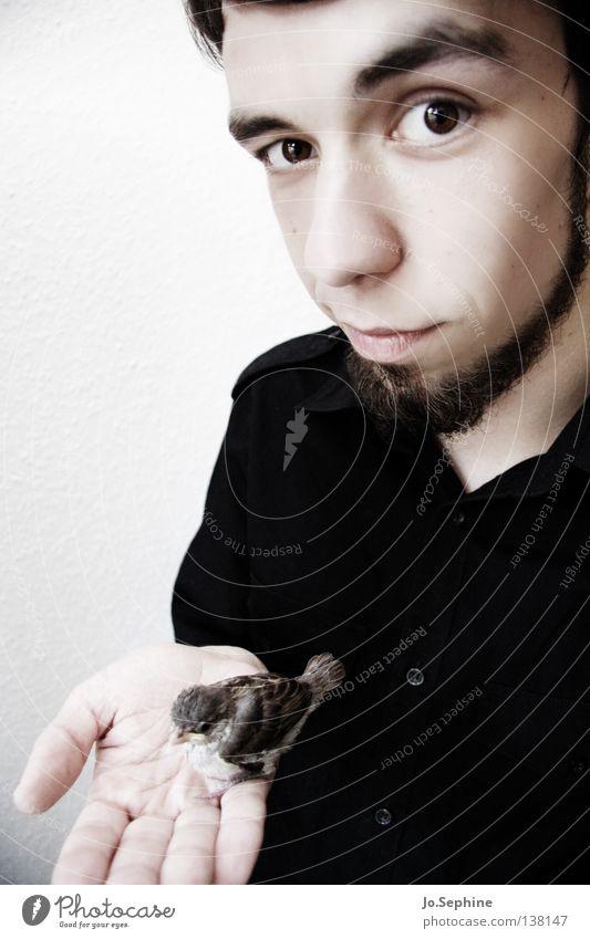 he likes birds. Mann weiß schwarz Gesicht Erwachsene Tierjunges Vogel niedlich weich festhalten Bart Hemd Vertrauen zeigen Geborgenheit zerbrechlich