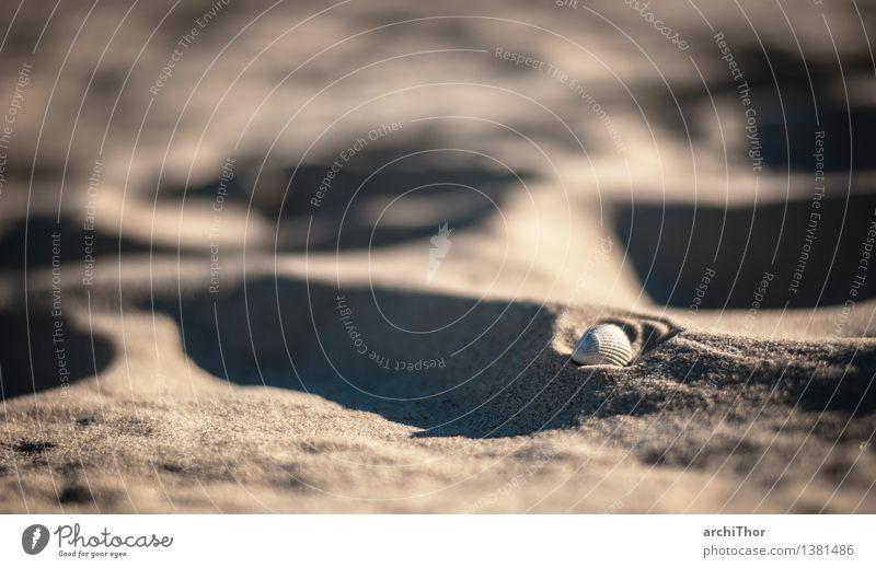 Strandmuschel #2 Schönes Wetter Wüste Muschel Muschelschale Muschelsand Sand braun grau weiß Fernweh Ferien & Urlaub & Reisen Sommer Sommertag Sommerurlaub