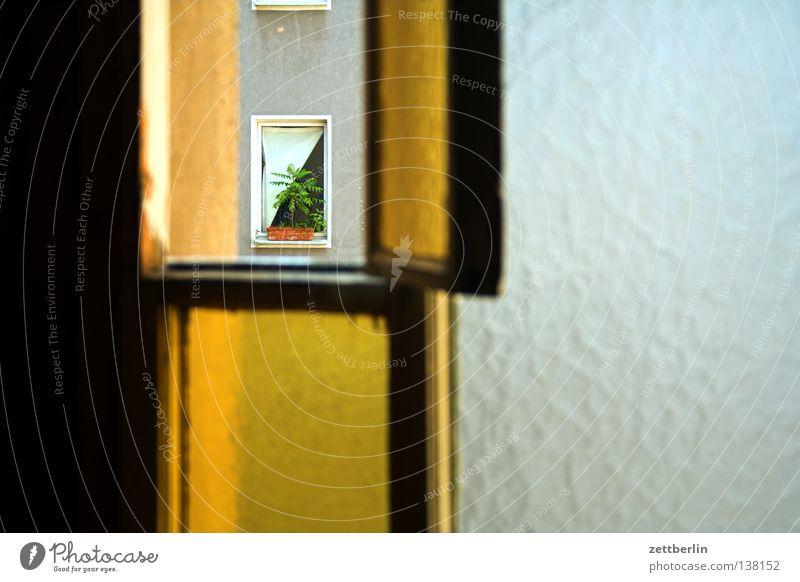 Fenster Riffelglas durchsichtig Haus Stadthaus Hinterhof Flur Treppenhaus Gardine Zimmerpflanze Luft lüften Glas Fensterscheibe Plattenbau seitenflügel Rahmen