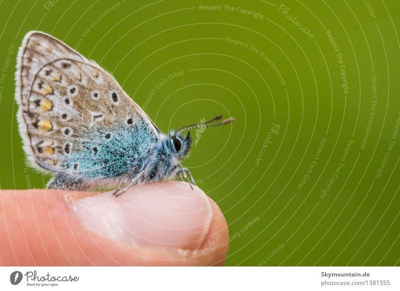 Vertrauen Umwelt Natur Tier Schönes Wetter Garten Park Wiese Feld Wald Wildtier Schmetterling Tiergesicht Flügel Schuppen 1 blau braun gelb gold grau grün