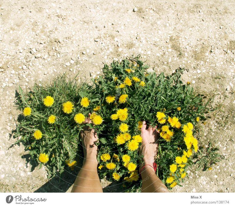 Öko-Latschen II Farbfoto Außenaufnahme Insel Frau Erwachsene Beine Fuß Erde Frühling Dürre Blume Gras Feld Schuhe Stein dreckig trocken braun gelb grau grün