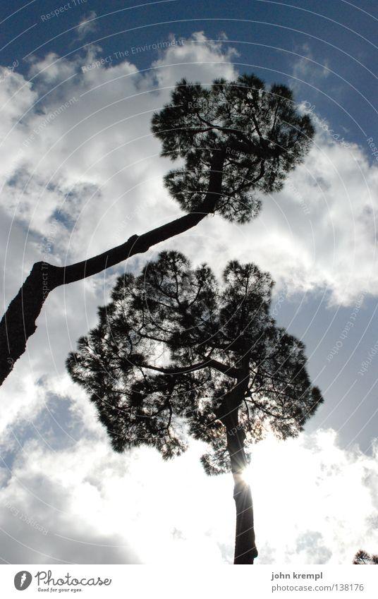jane und john krempl Baum Pinie Rom Süden Wolken schlechtes Wetter Licht Gegenlicht blenden hell Baumkrone Himmel monte pincio blau Sonne