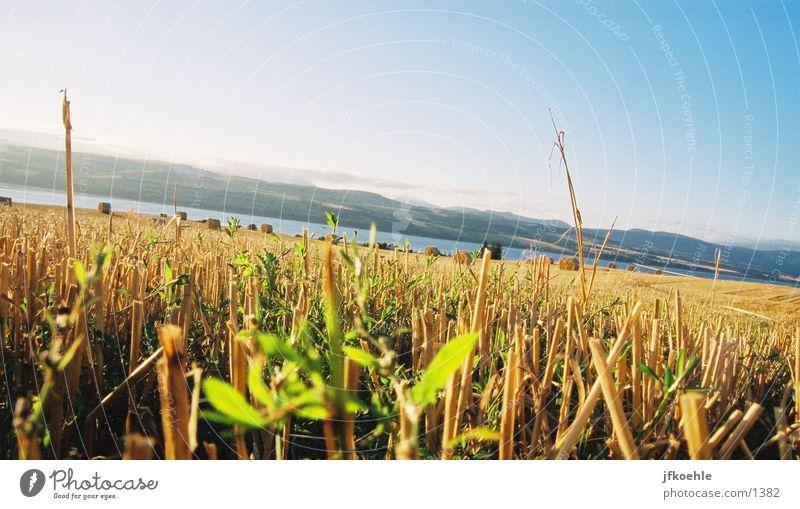 Blick auf die Nordsee Himmel Feld Korn England Stroh