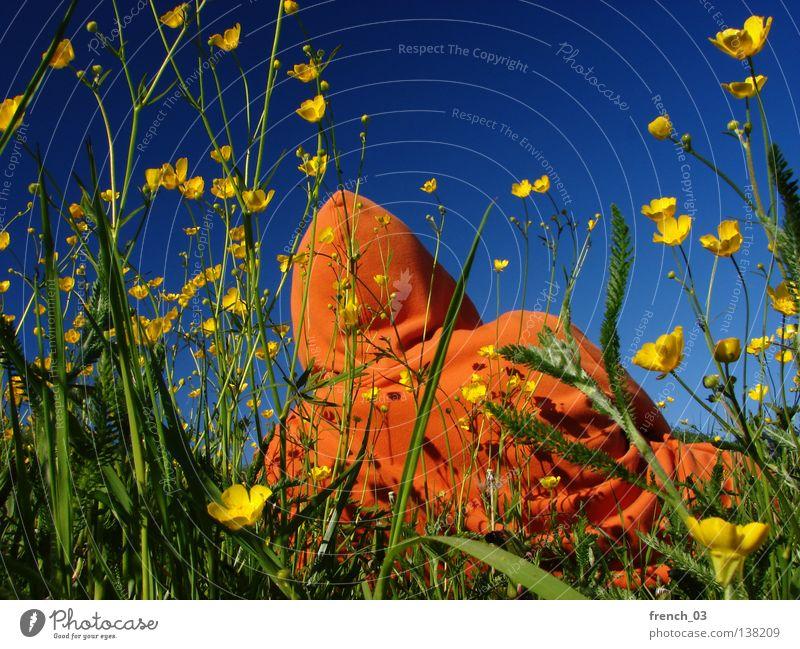 raus Himmel Mann Natur Jugendliche blau grün schön Pflanze Sommer Blume Farbe Einsamkeit ruhig Erholung Landschaft gelb