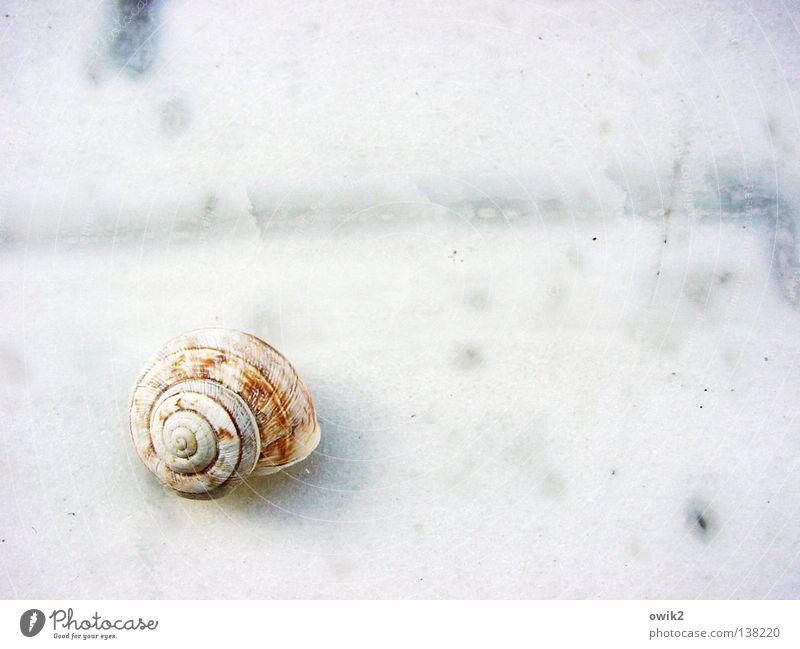 Minimal Music ruhig Natur Schnecke Ornament warten elegant exotisch fest hell klein nah weiß Einsamkeit Idylle Ordnung Vergänglichkeit Weichtier Schneckenhaus
