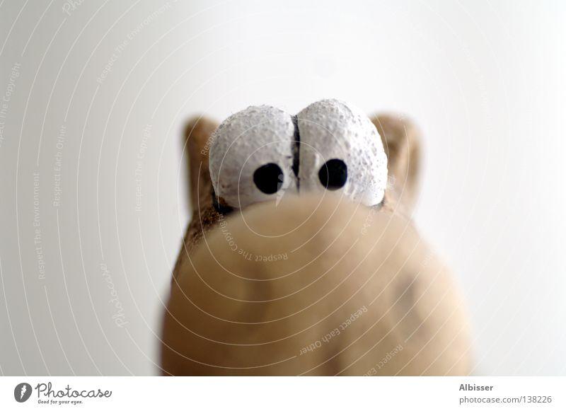 Wundernase weiß Freude schwarz Tier Auge Stil Kopf braun lustig Nase groß Suche Humor frech Comic