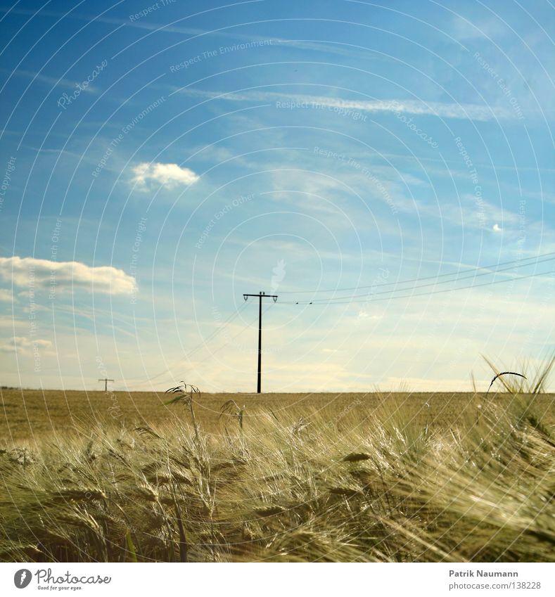 Sommertag sommerlich Landwirtschaft ländlich Gras Weizen Gerste Wunsch Elektrizität Strommast Starkstrom technisch Wolken grün weiß Himmel Landschaft Natur blau