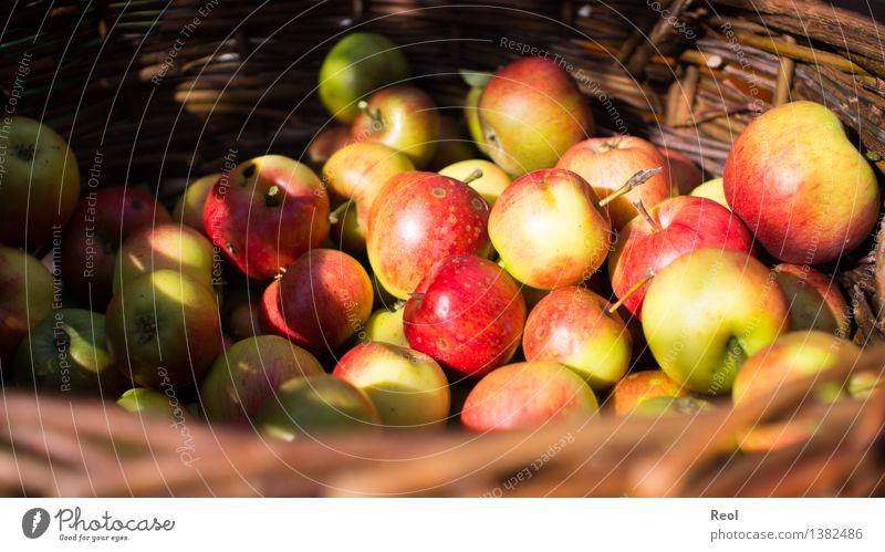Apfelernte II Lebensmittel Ernährung Bioprodukte Natur Pflanze Herbst Frucht Korb Flechtkorb Wachstum rot frisch Gesundheit Gesunde Ernährung natürlich reif