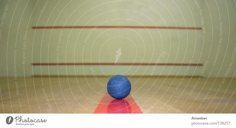 Squashball in einem leeren Spashcourt blau rot Sport Wand Spielen Mauer Gebäude Linie Hintergrundbild leer Kreis Ball rund Dinge Stillleben