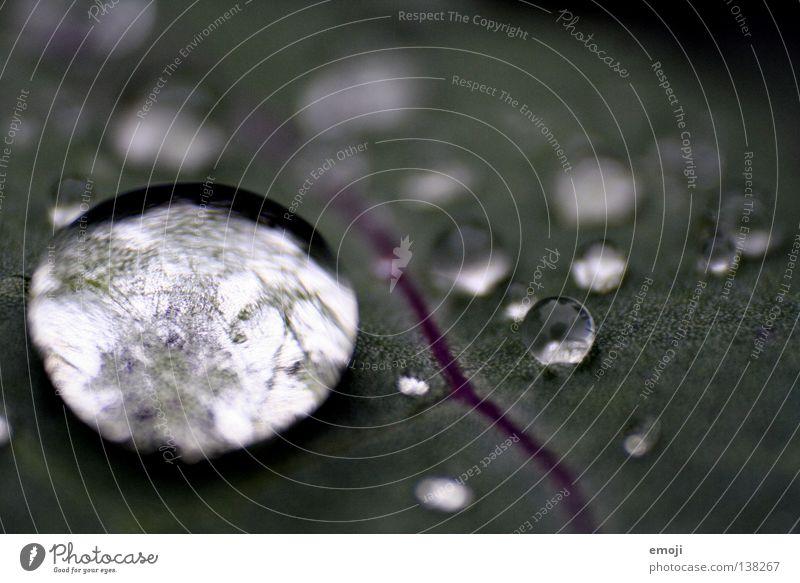 glasklar Wasser Freude dunkel Regen glänzend Wassertropfen nass rund Klarheit nah feucht Blattadern Blubbern