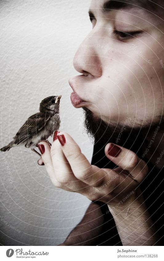 he loves birds. Mann Erwachsene Vogel Küssen Liebe niedlich weich Geborgenheit Tierliebe Spatz Feder Gesicht Bart Kussmund Nagellack Hand festhalten