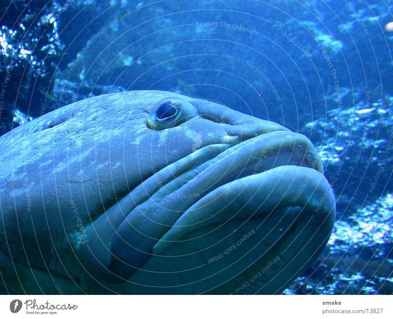 blue fish Natur Wasser blau Auge Fisch Maul