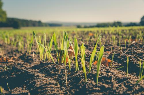 wintergerste Ferien & Urlaub & Reisen Garten Feld Freizeit & Hobby Tourismus Wachstum wandern authentisch Ausflug Abenteuer Landwirtschaft Bioprodukte Getreide