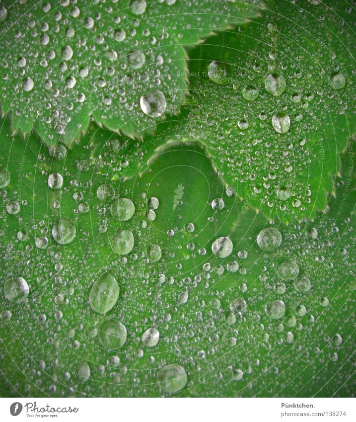 ONEBillion Teardrops from HEAVEN Natur Pflanze grün Wasser Landschaft Blatt kalt Traurigkeit Regen Wetter Bodenbelag Trauer Tropfen Flüssigkeit frieren weinen
