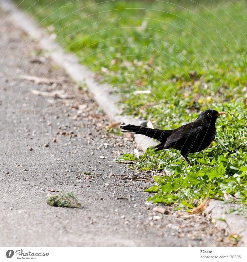 mei a vogerl Vogel Tier Teer Beton Wiese grün Gras klein Pause ruhig Einsamkeit Natur scharz Flügel Linie