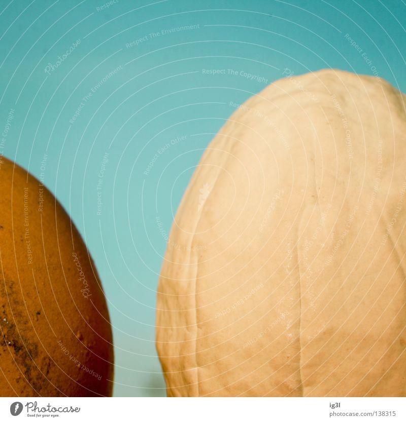Generationskonflikt Hühnerei Makroaufnahme Bildausschnitt Anschnitt Eierwärmer Vor hellem Hintergrund
