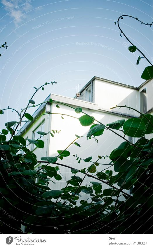 Nachbarschaft grün weiß Fenster Blatt Wolken modern Himmel blau Zweig Stalker