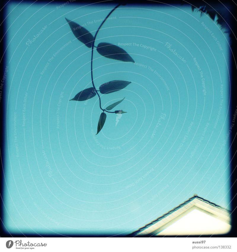 Wuchsrichtung Dach Konzentration analog Rahmen Sucher Brennpunkt umrandet Dachgiebel Lichtschacht