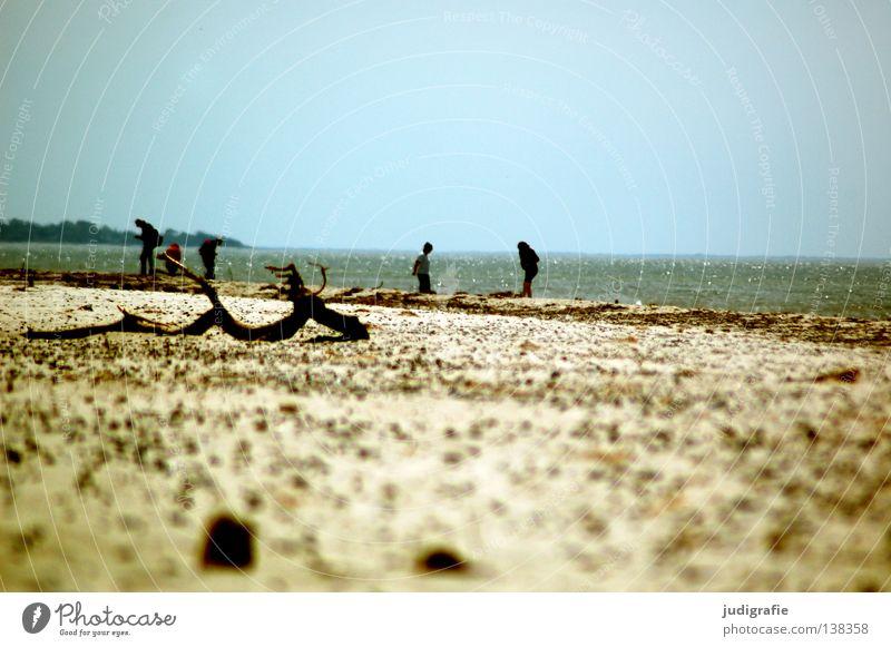 Strand Meer Küste Ferien & Urlaub & Reisen Mensch Suche Spaziergang wandern genießen Muschel Weststrand Umwelt Farbe Sommer Sand Ostsee laufen Wasser Stein